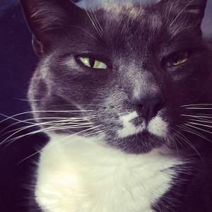 cat behaviour consult