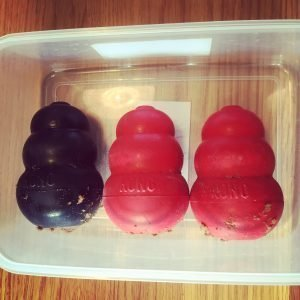Place the filled Kongs in a lunch box before the freezer