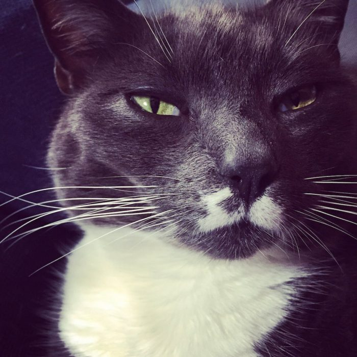cat behavioural consultation
