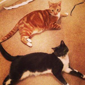 multi-cat household