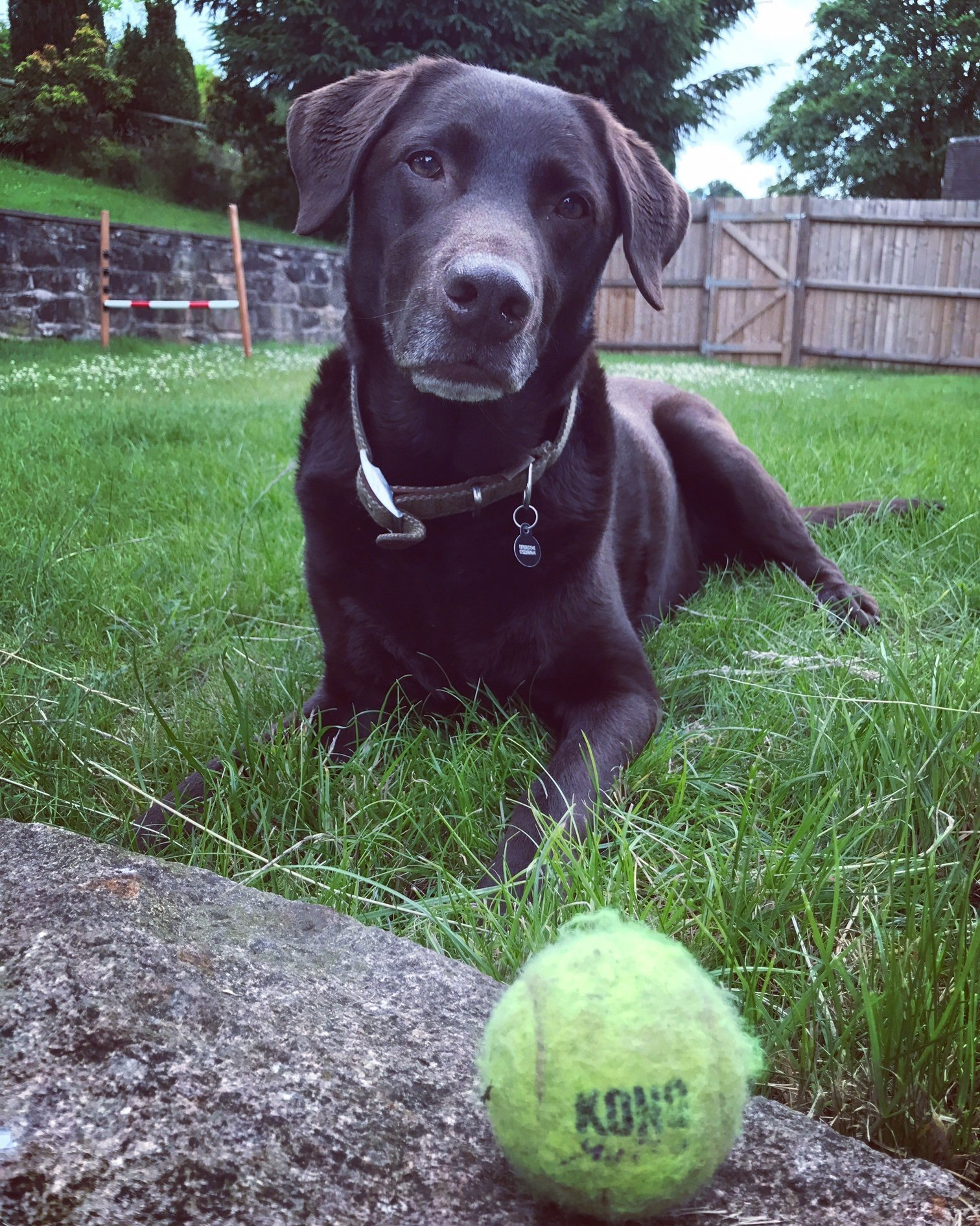 Are tennis balls bad for my dogs teeth? - Quora