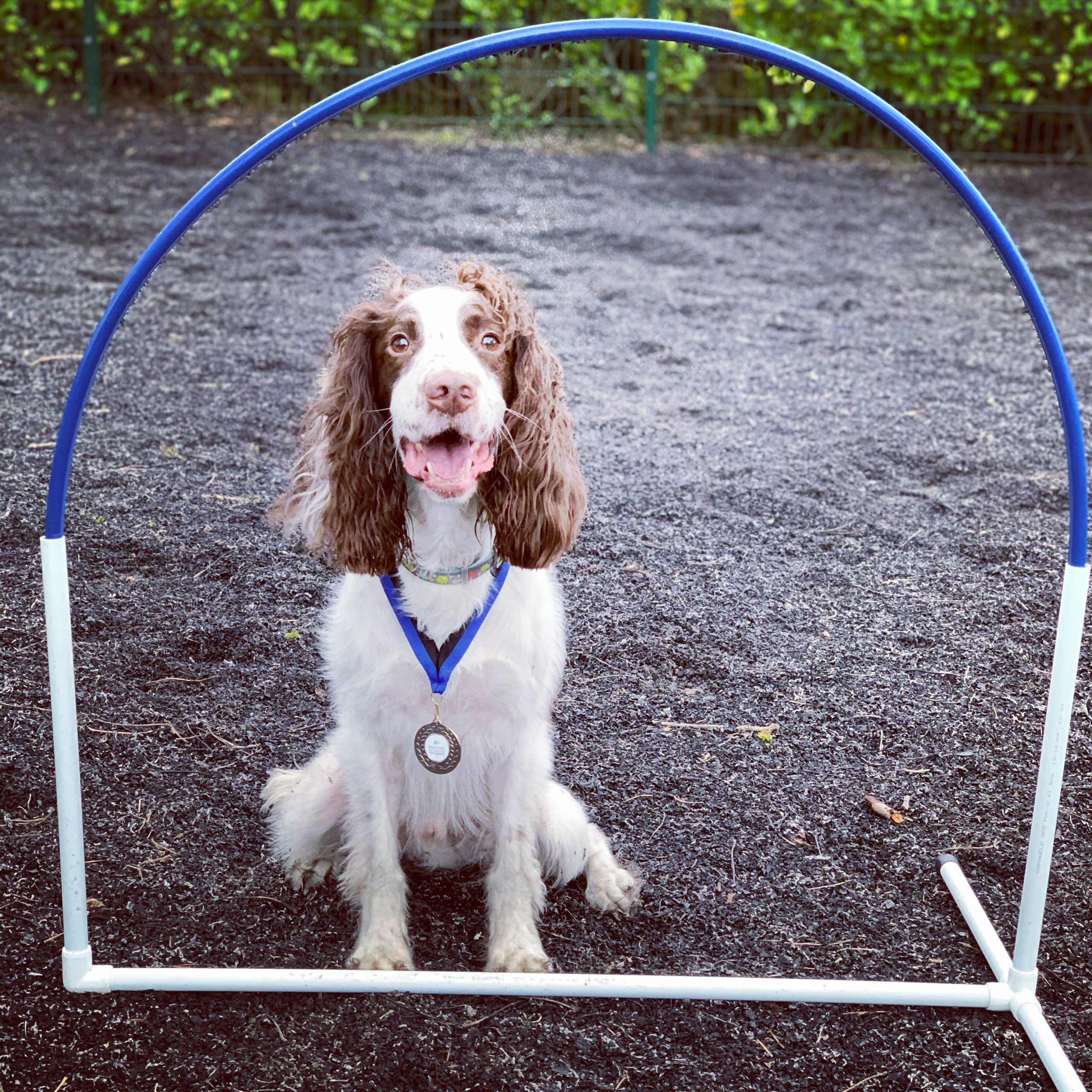 Positive Pet Training Hoopers Dog