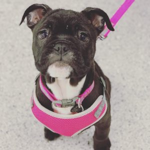 VIP Puppy Training
