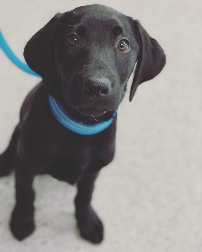 Positive Pet Training