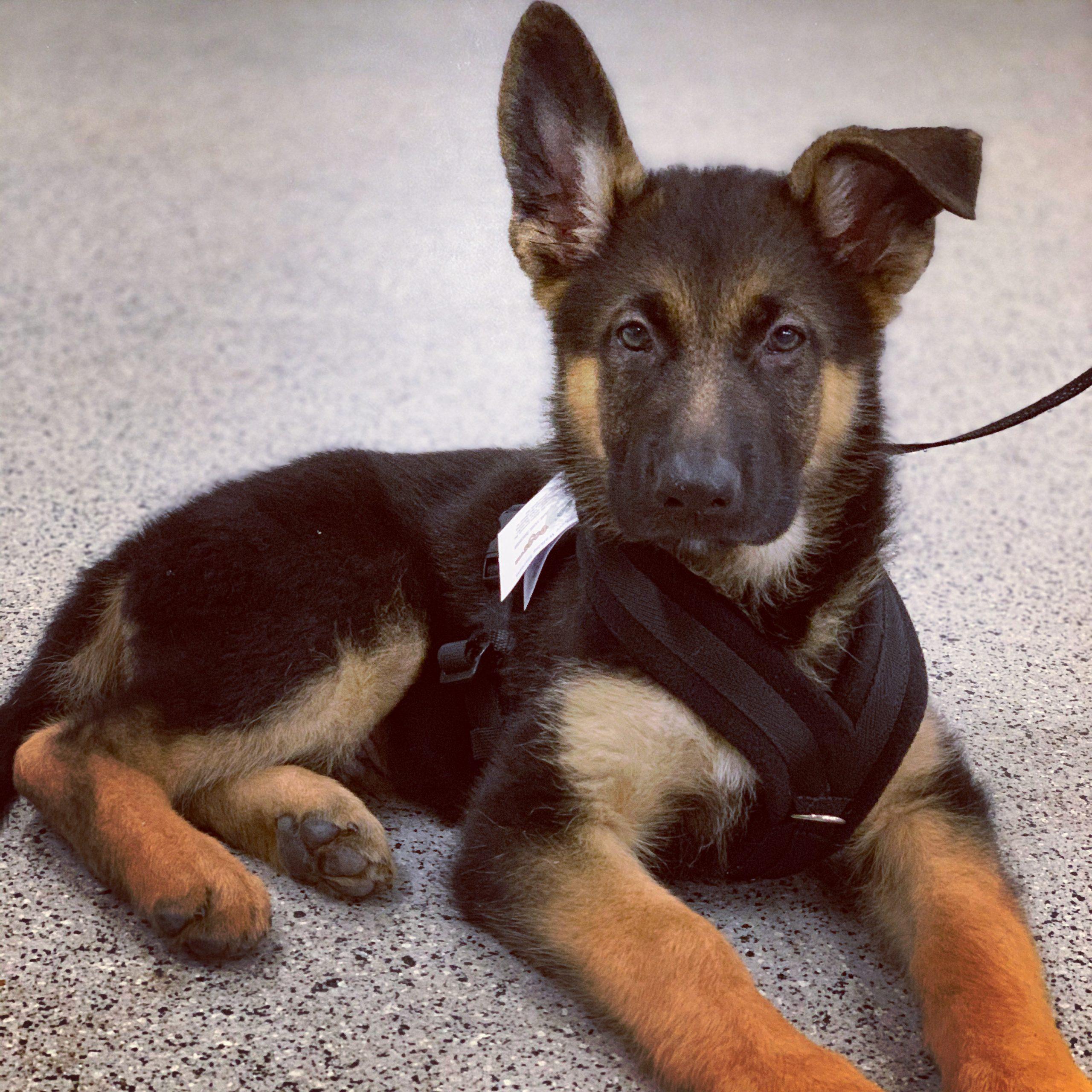 Puppy classes enough